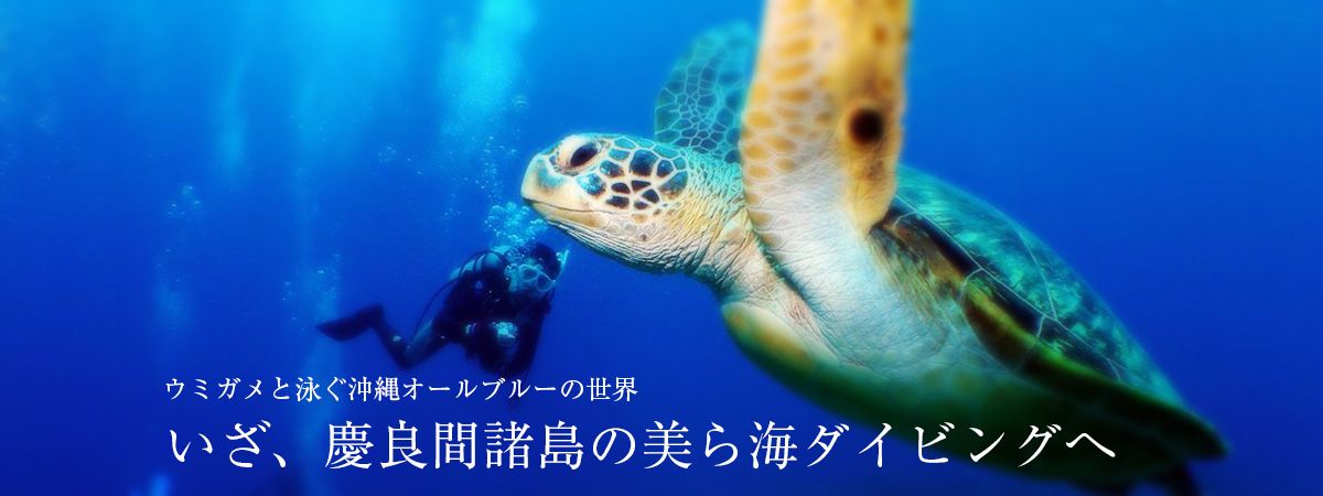 ウミガメと泳ぐ沖縄オールブルーの世界 いざ、慶良間諸島の美ら海ダイビングへ