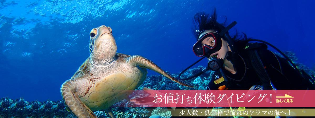 格安で沖縄・慶良間諸島の体験ダイビングを楽しむなら、ココオーシャンへ!