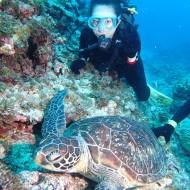 ウミガメと体験ダイビング