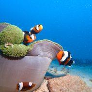 沖縄本島ダイビング