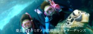 水中写真無料撮影 & プレゼント 慶良間でウミガメと高確率シャッターチャンス