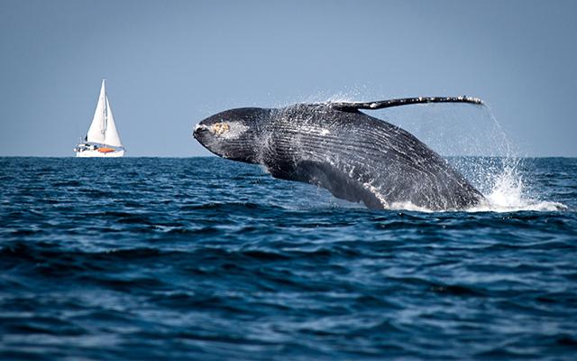 whale_ph