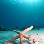 クリスマス ダイビング