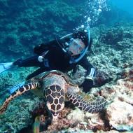 カメと体験ダイビング